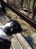 Cão de guarda fotografia de stock