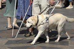 Cão de guia Imagens de Stock
