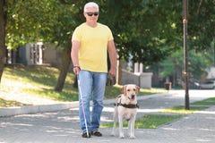 Cão de guia que ajuda o homem cego fotos de stock royalty free