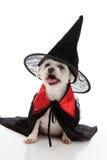 Cão de Halloween Fotos de Stock Royalty Free