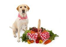 Cão de Labrador com a cesta dos vegetais imagens de stock royalty free