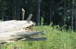 Cão de madeira Fotografia de Stock