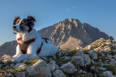 Cão de Melody Super e o pico de Gran o Sasso fotos de stock