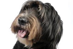 Cão de Mixedbreed em um fundo branco Foto de Stock