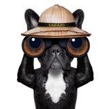 Cão de observação com binóculos imagens de stock royalty free
