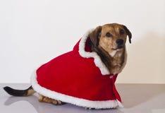 Cão de Papai Noel Foto de Stock