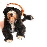 Cão de Papai Noel Fotografia de Stock