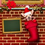 Cão de Papai Noel do Natal nas meias para o xmas Fotografia de Stock