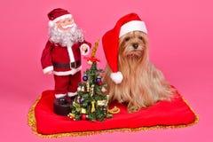 Cão de Papai Noel e donzela da neve com a árvore do ano novo Fotos de Stock