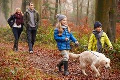 Cão de passeio da família através da floresta do inverno