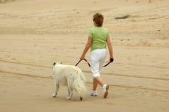 Cão de passeio da mulher Imagem de Stock Royalty Free