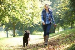 Cão de passeio da mulher Fotos de Stock Royalty Free