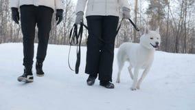 Cão de passeio dos pares irreconhecíveis nas madeiras video estoque