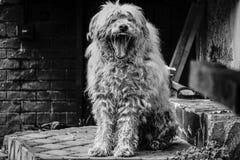 Cão de pastor bonito Fotografia de Stock Royalty Free