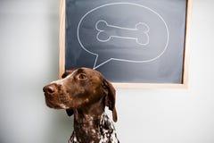 Cão de pensamento Fotografia de Stock Royalty Free