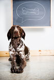 Cão de pensamento Fotografia de Stock