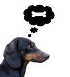Cão de pensamento Fotos de Stock Royalty Free
