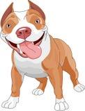 Cão de Pitbull ilustração royalty free