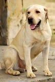 Cão de polícia Imagens de Stock