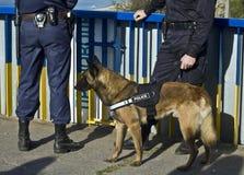 Cão de polícia fotos de stock royalty free