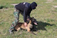 Cão de polícia especial no treinamento Fotos de Stock Royalty Free