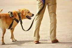 Cão de polícia de trabalho foto de stock