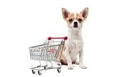 Cão de Pomeranian ao lado de um carro de compra vazio Imagens de Stock Royalty Free