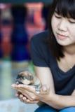 Cão de Pomeranian com mulheres Foto de Stock Royalty Free
