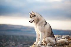 Cão de puxar trenós no mountains3 Imagem de Stock Royalty Free