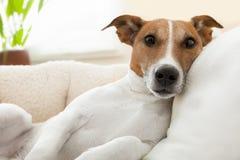Cão de Realxing fotografia de stock