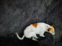 Cão de relaxamento foto de stock royalty free