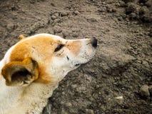 Cão de relaxamento imagem de stock royalty free