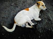 Cão de relaxamento fotos de stock royalty free