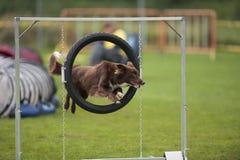 Cão de salto Imagens de Stock