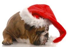 Cão de Santa com atitude Imagens de Stock Royalty Free