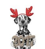 Cão de Santa nos chifres da rena com 2017 números do ano novo Fotografia de Stock Royalty Free