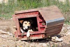 Cão de satisfação Fotografia de Stock Royalty Free