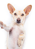 Cão de Selfie fotos de stock