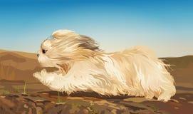 Cão de Shih Tzu ilustração do vetor