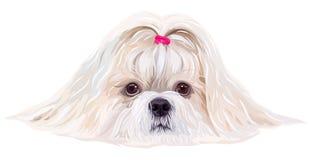 Cão de Shih Tzu ilustração royalty free