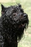 Cão de sorriso imagem de stock royalty free