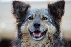 Cão de sorriso imagens de stock