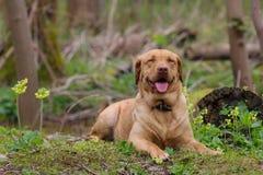 Cão de sorriso fotos de stock