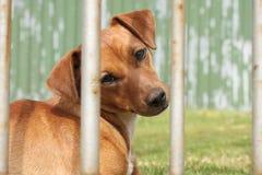 Cão de vista triste Fotografia de Stock