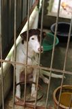 Cão de vista triste no abrigo Imagem de Stock Royalty Free