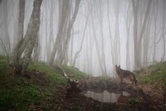 Cão dentro à floresta Fotos de Stock Royalty Free