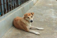 Cão desabrigado Fotos de Stock Royalty Free