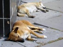 Cão desabrigado Fotografia de Stock