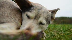 Cão desabrigado video estoque