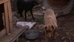 Cão desabrigado com fome na borda da estrada, cena urbana vídeos de arquivo
